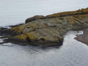 Görenleri hayrete düşüren 'Timsah Adası' havadan görüntülendi