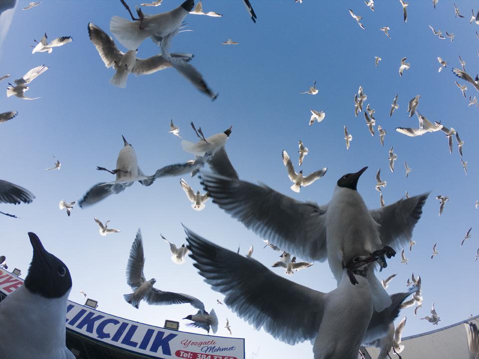 Ankara semalarındaki martılar başkentlileri şaşırttı
