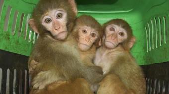 Ağrı'da yakalanan 4 yavru maymun Gaziantep'e getirildi