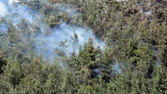 Muğla'nın Milas ilçesinde orman yangını çıktı