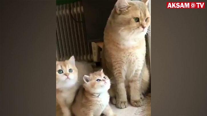 Anne ve Minnoş Yavruları