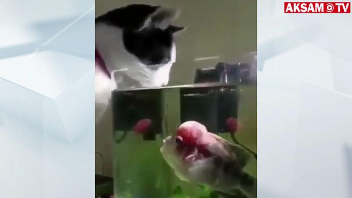 Susayan Kediyi Korkutan Balık