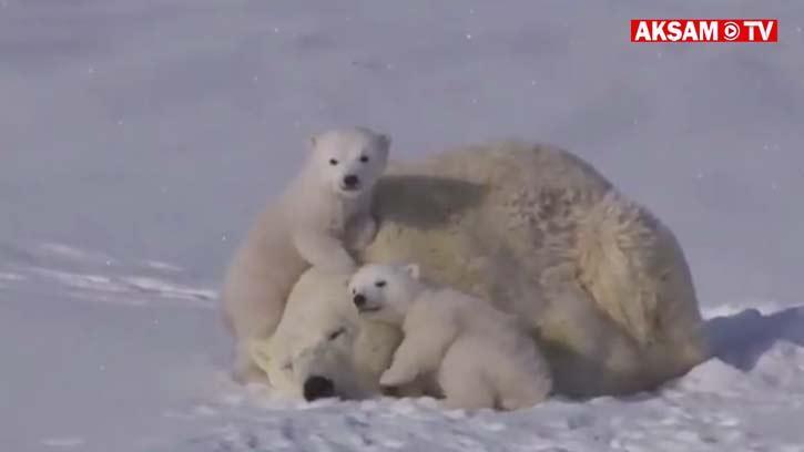 Böyle Tatlı Aile Gördünüz Mü?