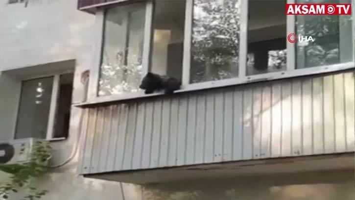 Evin Balkonuna Çıkan Yavru Ayı Herkesi Korkuttu