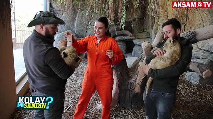 Aslan bakıcısı olmak kolay mı sandın?