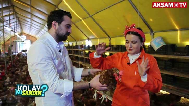 Tavuk yetiştiriciliği Kolay Mı Sandın?