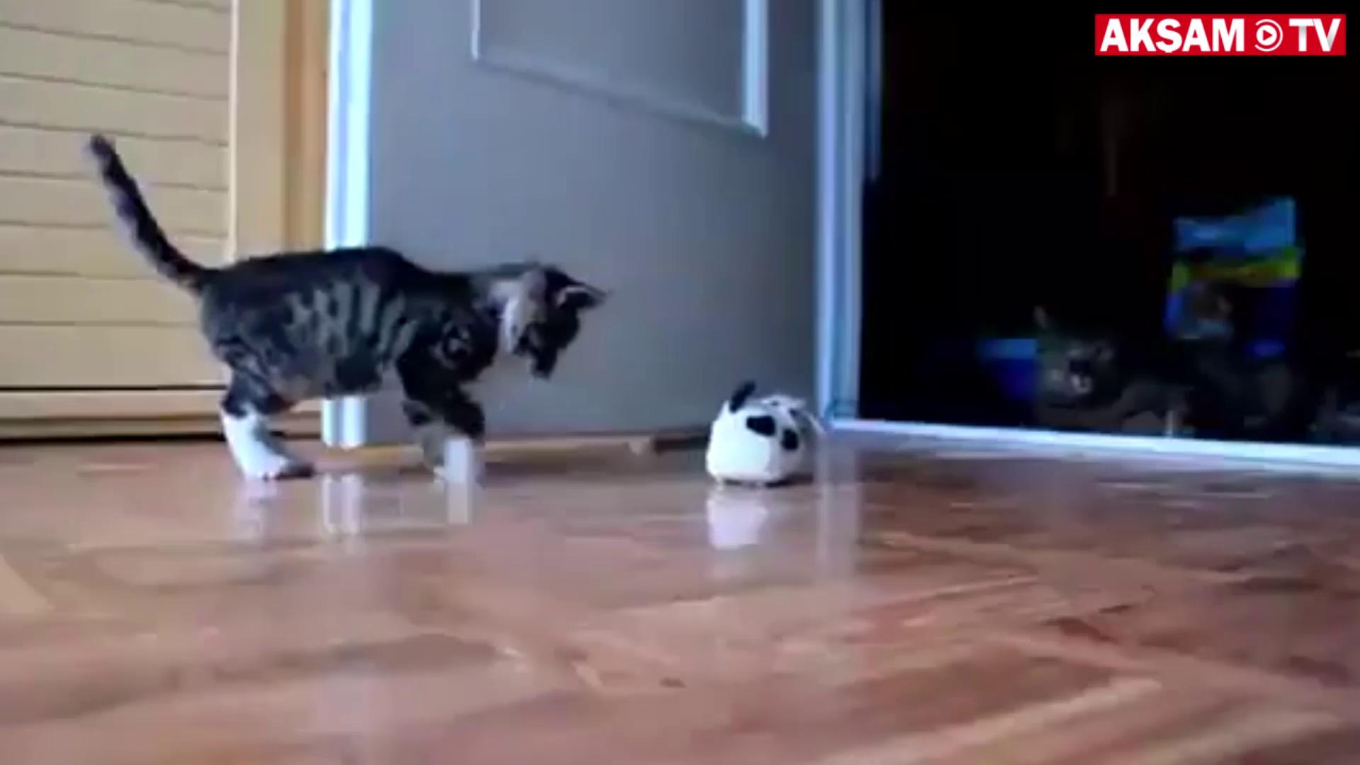 Oyuncakla gerçekmiş gibi kavga eden kedi