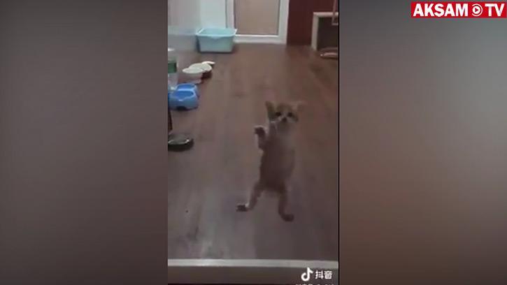 Kendini Örümcek Sanan Kedi