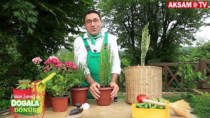 Bitkilerin şifalı etkileri