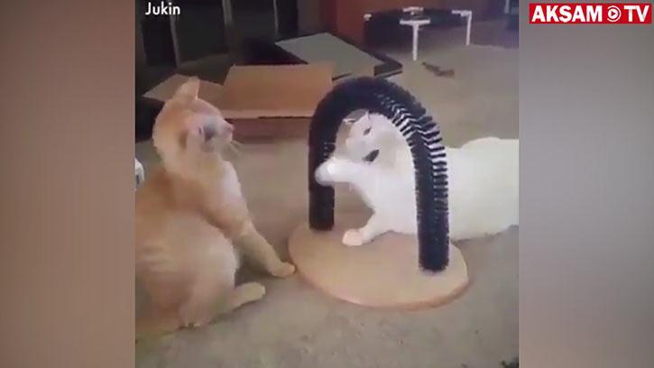 Bütün Kediler Çok Akıllı :)