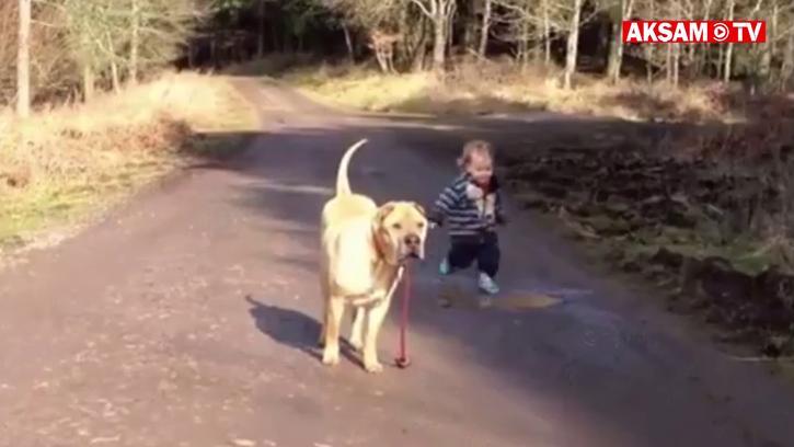 Uyumlu Köpek ve Çılgın Sahibi