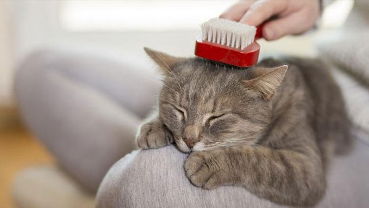 Evde Kedi Besleyenler İçin Temizlik Önerileri