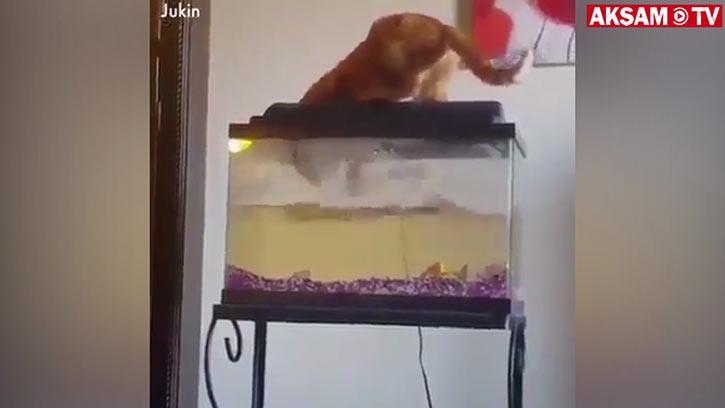 Kediler Ne Kadar Akıllı? :)