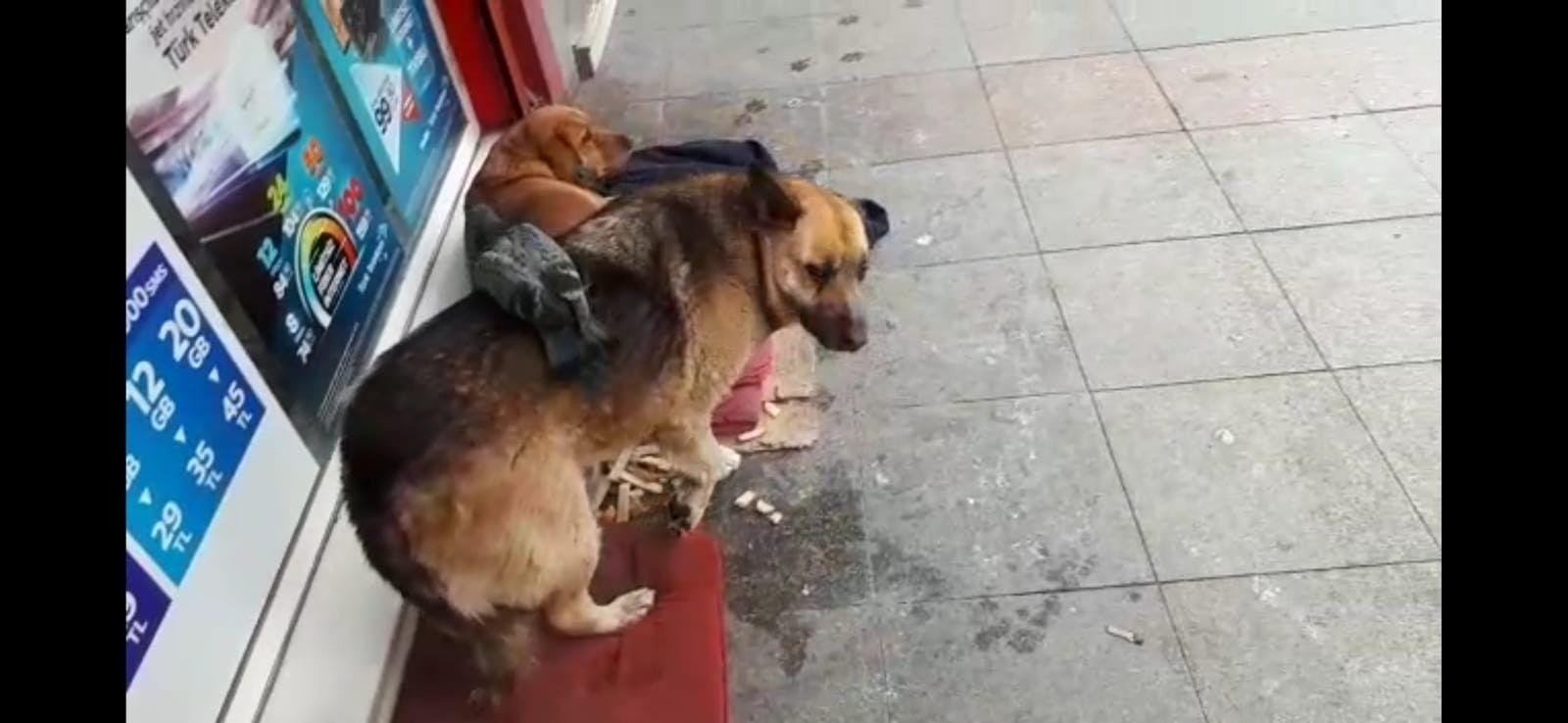 Güvercin ve köpeğin şaşırtan dostluğu kamerada