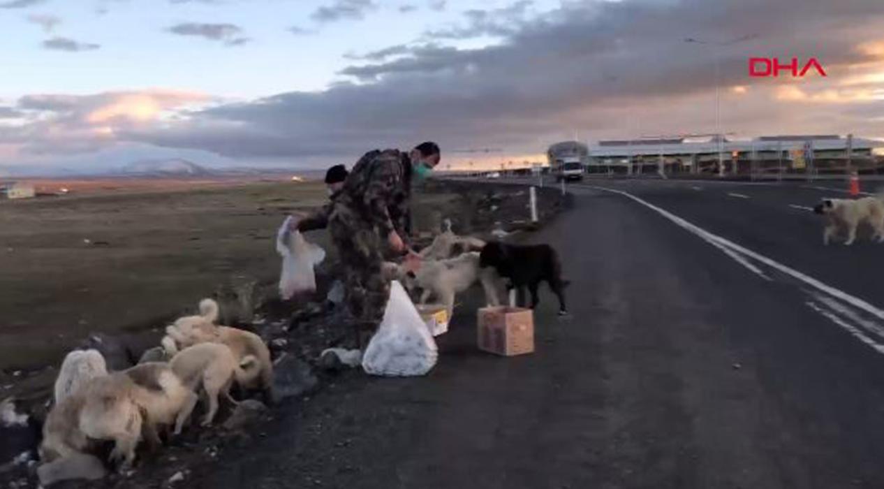 Polisler yemeklerini köpeklerle paylaştı...