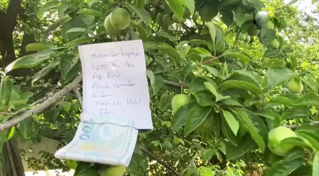 Eşi aşerdiği için kopardığı eriklerin parasını ağaca astı