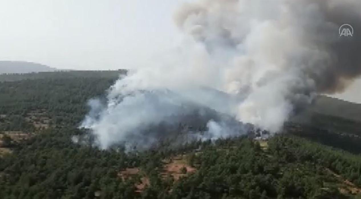 Milas'ta orman yangını...