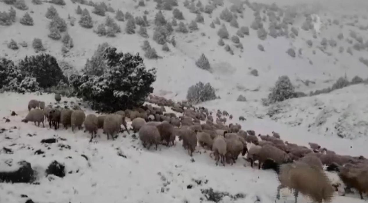 Koyunlarını yaylaya çıkaran köylülere Mayıs ayında kar sürprizi