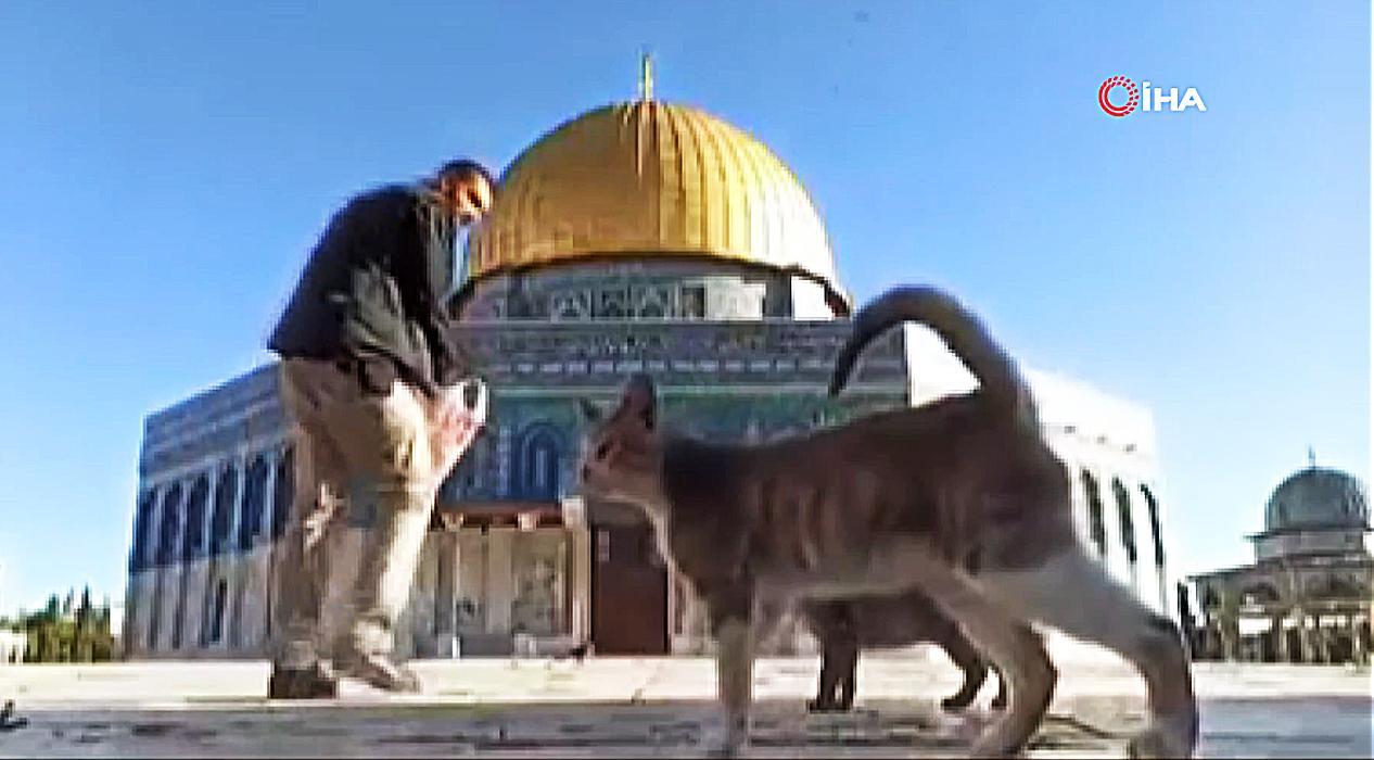 Mescid-i Aksa'nın bahçesinde kedileri besleyen görevli takdir topladı