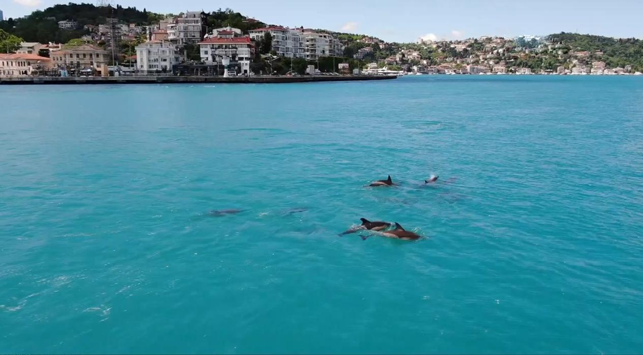 Yunusların turkuaza bürünen İstanbul Boğazı'nda dansı büyüledi