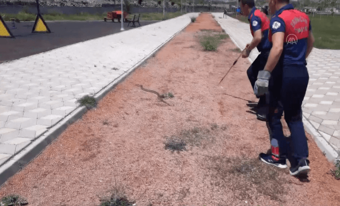 Çocuk parkında 2 metrelik yılan!