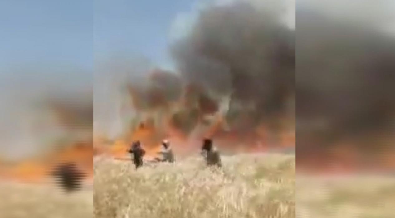 YPG/PKK Resulayn'da binlerce dönüm tarım arazisini ateşe verdi