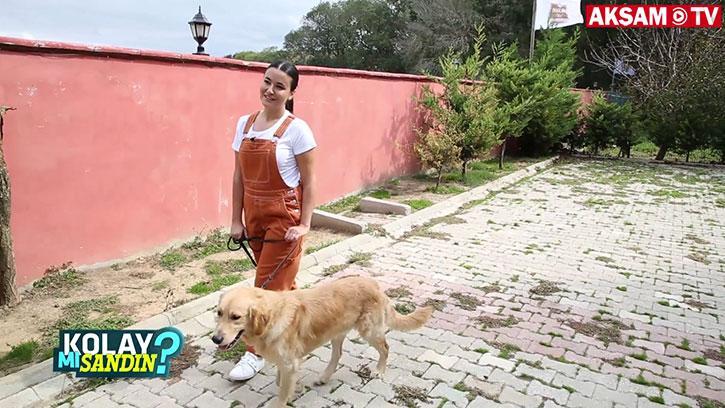 Köpek eğitmeni olmak kolay mı?