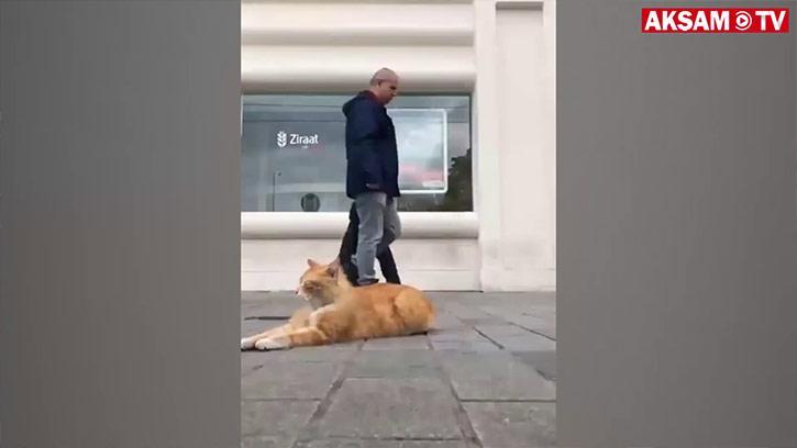 istanbul'da Sokak Kedisi Olmak Varmış