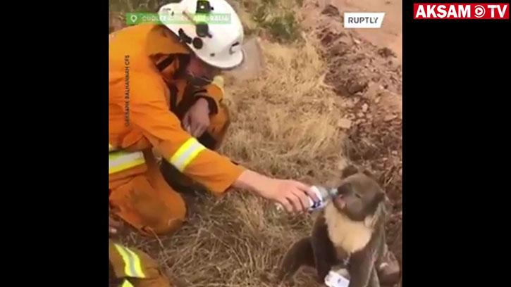 İtfaiye Eri Susayan Koalaya Böyle Su Verdi