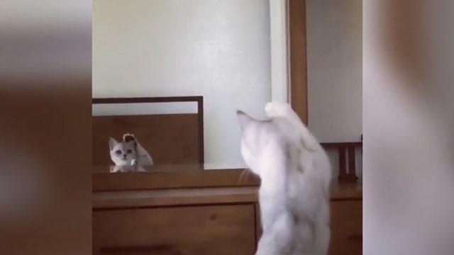 Aynada kulaklarını farkeden kedi kırdı geçirdi