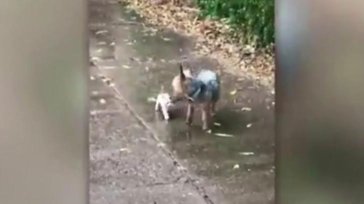 Köpek, Yağmurda Islanan Sahipsiz Kediyi Evine Götürdü