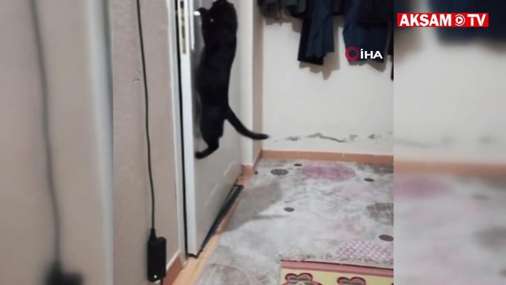 Patisiyle Kapıyı Açan Kedi Sosyal Medyada İlgi Odağı Oldu