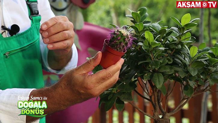 Bitkilere Bunları Yapmayın! İşte Doğru Bilinen Yanlışlar... | #DoğalaDönüş