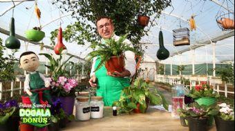 Bitkilerin Yaşama Olumlu Etkileri Nelerdir? #DoğalaDönüş