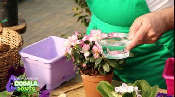 Bitkiler Radyasyonu Engeller Mi? | #DoğalaDönüş