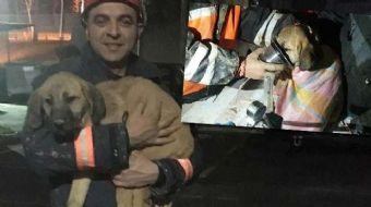 Beykoz'un Dereseki Köyü'nde 70 metre derinliğindeki sondaj kuyusuna düşen yavru köpek kurtarıldı.