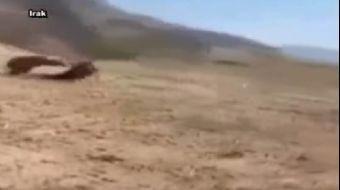 Irak'ın Süleymaniye kentinde bir ayının Peşmegelere saldırması sonucu 2 Peşmerge yaralandı.