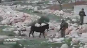 İşgalci İsrail askerlerinin dünyaya rezil oldukları anların derlendiği video sosyal medyada büyük il