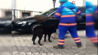 Temizlik İşçisinin Sokak Köpeklerine Süpürgeyle Masaj Yaptığı Anlar Kamerada