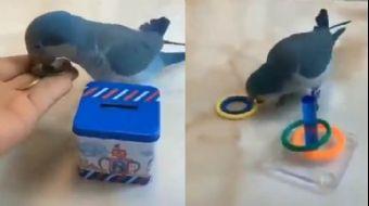 Sosyal Medya Bu Kuşu Konuşuyor! Zekasıyla İzleyenleri Şaşırttı