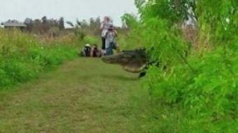 Normalde insanlar neredeyse otomobil büyüklüğünde bir timsah görünce koşarak kaçar. Ancak bu cesur t