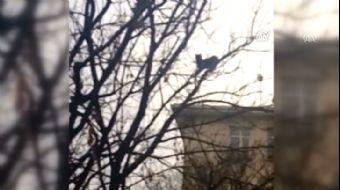 Köpekten Kaçarken Ağaca Çıkan Kedi, İtfaiye Merdiveninden Korkup İndi