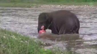 Fillere sosyal deney yapt�lar, ald�klar� sonu� mutlu etti. Bak�c�, bo�ulmu� taklidi yaparak fillerin