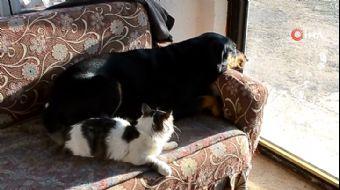 Kedi İle Köpekten 'Dostluk' Örneği
