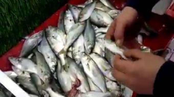 Bilinçsizce tüketilen balıklar ölüme neden oluyor! İşte kanıtı