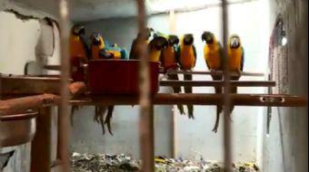 Sosyal Medyadan Papağan Satmaya Çalışan Şüpheli Yakalandı