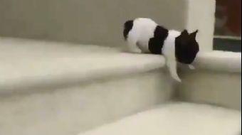 Merdivenlerden İnmeye Çalışan Sevimli Yavru Köpek Gülümsetti