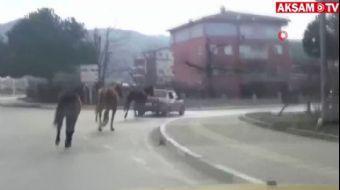 Otomobile Bağladığı Atları Asfaltın Üzerinde Metrelerce Koşturdu