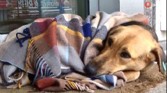 Yürekleri Isıtın Görüntüler Yalova'dan...Soğuktan Üşüyen Köpeğin Üstünü Şalla Örttüler