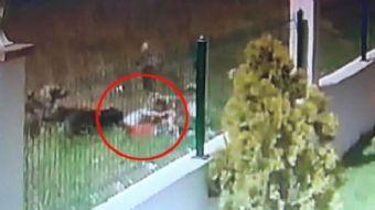 SAKARYA'nın Erenler İlçesi'nde yeşil alana düşen topunu almak için çitlerin üstünden atlayan 5 yaşın